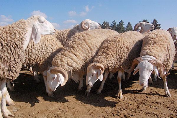 2014-mouton_398916976